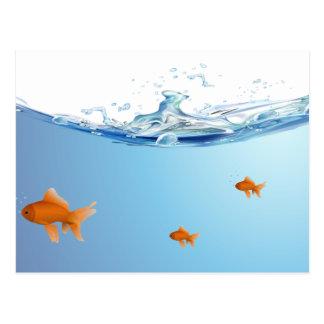 Goldfish under water aquarium post card