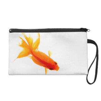 Goldfish, visión de arriba