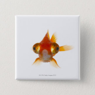 Goldfish with Big eyes 2 Button