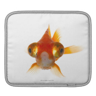 Goldfish with Big eyes 2 iPad Sleeves