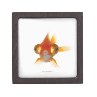 Goldfish with Big eyes 2 Keepsake Box
