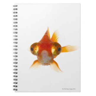 Goldfish with Big eyes 2 Note Book