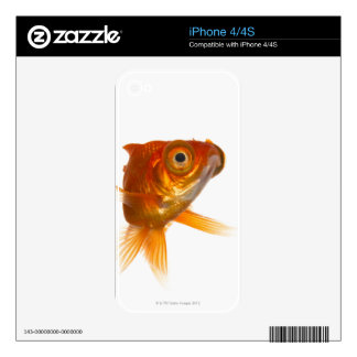 Goldfish with Big eyes 3 iPhone 4 Decal