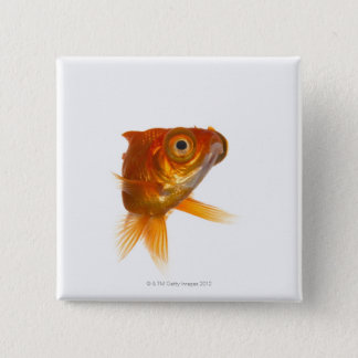 Goldfish with Big eyes 3 Pinback Button