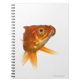 Goldfish with Big eyes 3 Spiral Note Books