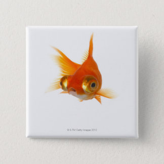 Goldfish with Big eyes Button