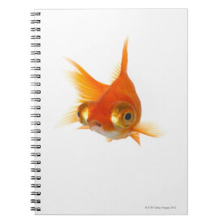 Goldfish with Big eyes Journals