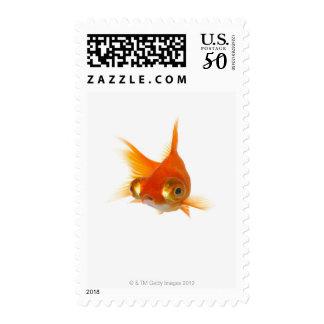 Goldfish with Big eyes Postage