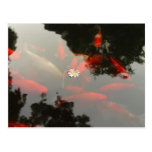 Goldfish y flor postal