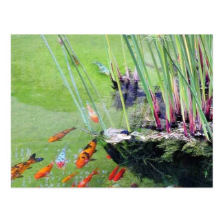 Goldfishes Postcard