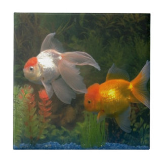 Goldfishing Ceramic Tile