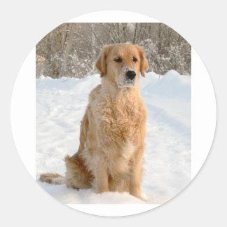 goldie sitting in snow classic round sticker