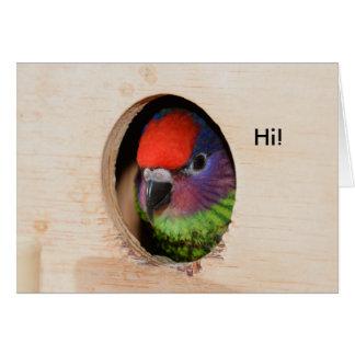 Goldie's Lorikeet Greeting Card