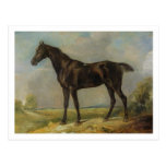 Golding Constable's Black Riding-Horse, c.1805-10 Postcard