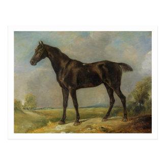 Golding Constable's Black Riding-Horse, c.1805-10 Postcard