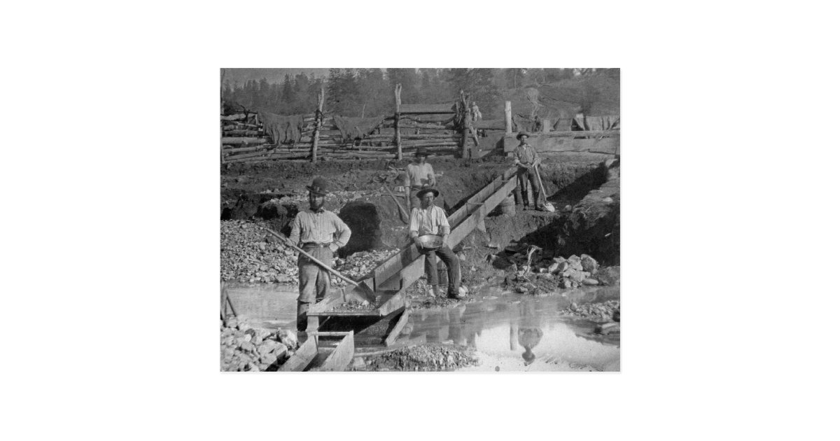 Goldminers Gold Rush Miners California 1850 Postcard