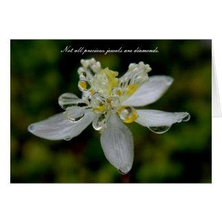 Goldthread with Dew on Unalaska Island Card
