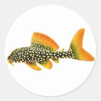 Goldy Sunshine Pleco Sticker