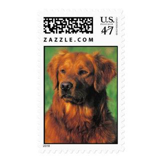 Golen Retriever postage stamp