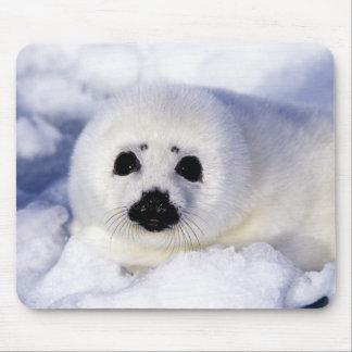 Golfo del hielo del perrito de foca de Groenlandia Tapete De Ratones