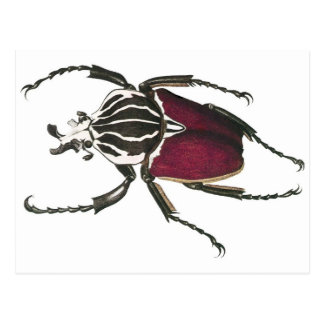 Goliath Beetle Post Cards
