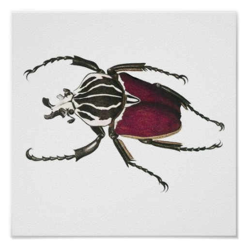 Goliath Beetle Posters