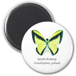 Goliath Birdwing Butterfly with Name Magnet