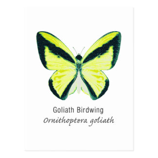 Goliath Birdwing Butterfly with Name Postcard