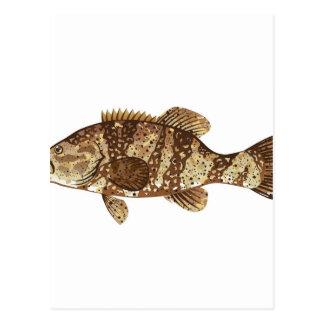 Goliath Grouper Gamefish ocean vector illustration Postcard