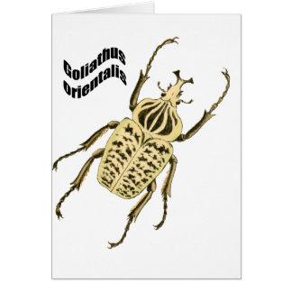 Goliathus orientalis card