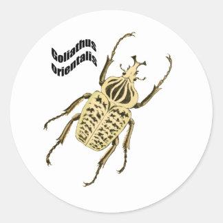 Goliathus orientalis classic round sticker