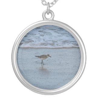 Golondrina de mar en el collar de la playa