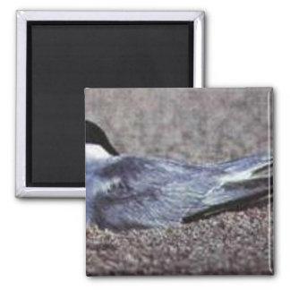 Golondrina de mar, lo menos (B07N) Imán De Frigorifico