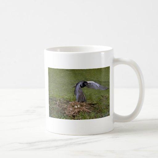 Golondrina de mar negra que vuela sobre jerarquía taza de café