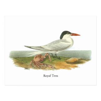 Golondrina de mar real, Juan Audubon Tarjetas Postales