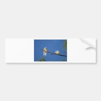 Golondrinas de mar blancas pegatina de parachoque
