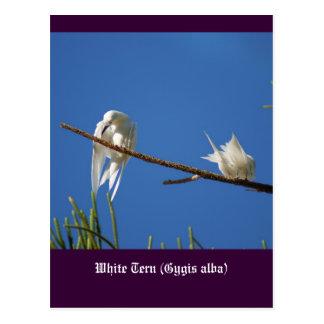 Golondrinas de mar blancas tarjeta postal