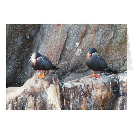 Golondrinas de mar del inca tarjeta de felicitación