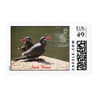 Golondrinas de mar del inca timbres postales