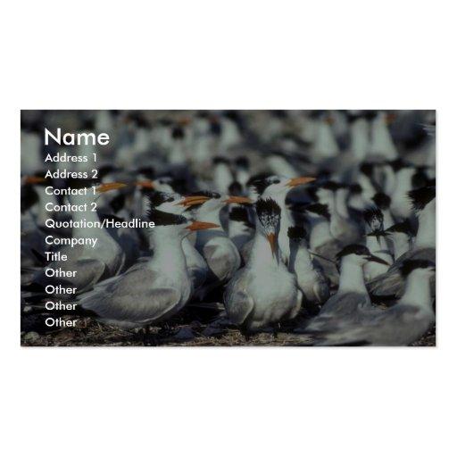 Golondrinas de mar reales tarjetas de visita