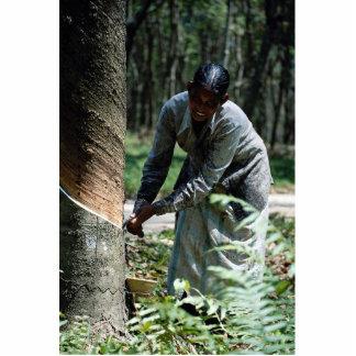 Golpeador de goma en el trabajo cerca de Ipoh, Mal Fotoescultura Vertical