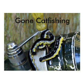 Gone Catfishing Catalpa Worms Old Reel Postcard