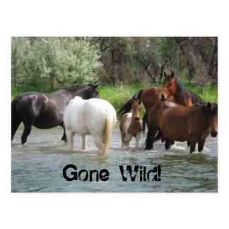 gone wild postcard