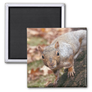 Good afternoon! 2 inch square magnet