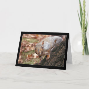 Good afternoon cards zazzle good afternoon greeting card m4hsunfo
