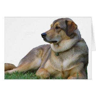 Good Dog Card