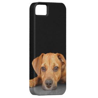 Good Dog iPhone SE/5/5s Case