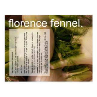 Good Growing Guide: Florence fennel & sprouts Postcard