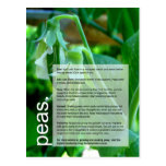 Good Growing Guide: Peas & Sweetcorn Postcards