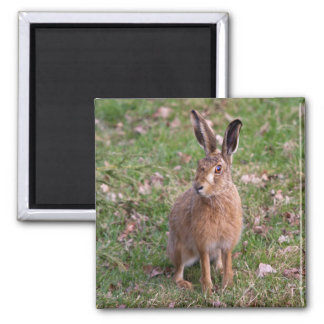 Good Hare Day Magnet